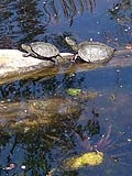 Turtles - Orth an der Donau