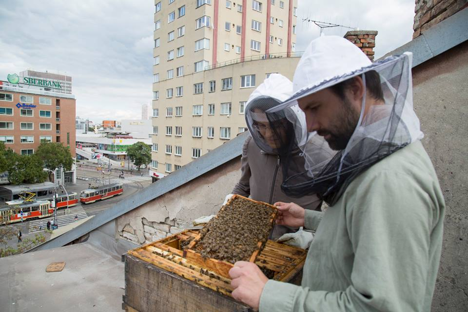 Hive at Stara Trznica building in Bratislava center